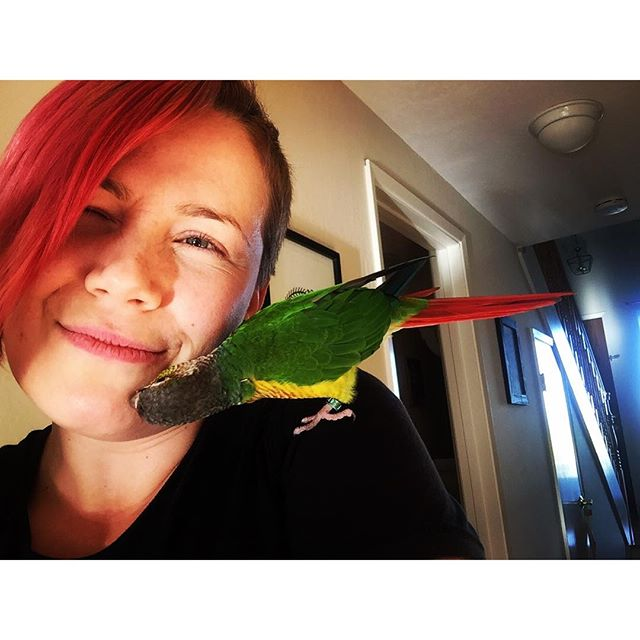 Who knew that birds can be so cuddly? This little guy was giving me a facial. So awesome! :) En tiennytkään, että linnut voi olla näin hellyydenkipeitä. :) Tämä pikku kaveri pussaili mun naaman puhtaaksi. ;) #birds #birdstagram #birdsofinstagram #bird #birdwoman #petbird #matchymatchy #pinkhair #pink #pinktail #lintu #linnut #pinkki #iloveanimals #animalsloveme #lemmikki #pusu