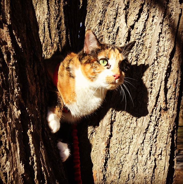 A day at the museum #catinatree #animals #cats #museum #museumofnaturalhistory #nyc #educational #silly