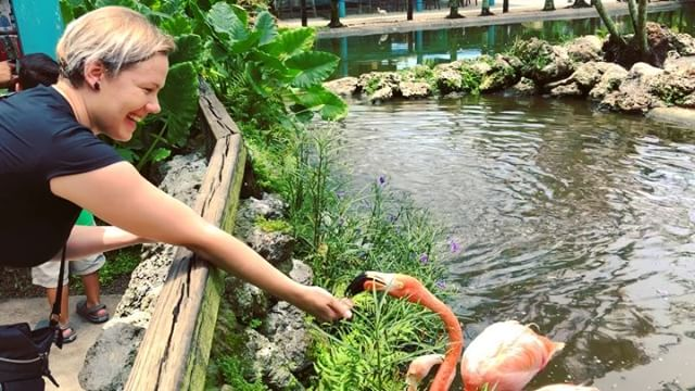 I decided that when in Florida, I have to see flamingos. So we went to a wildlife sanctuary that gives residence to permanently injured and non-releasable animals. #animalrescue #beautifulplace #helpinganimals #flamingos #feeding #florida #flamingogardens #iloveanimals #injured #sanctuary #everglades @flamingogardens